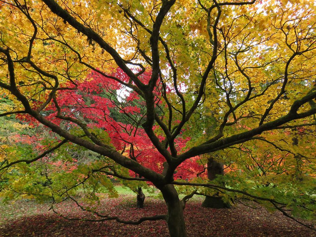 Autumn and Art